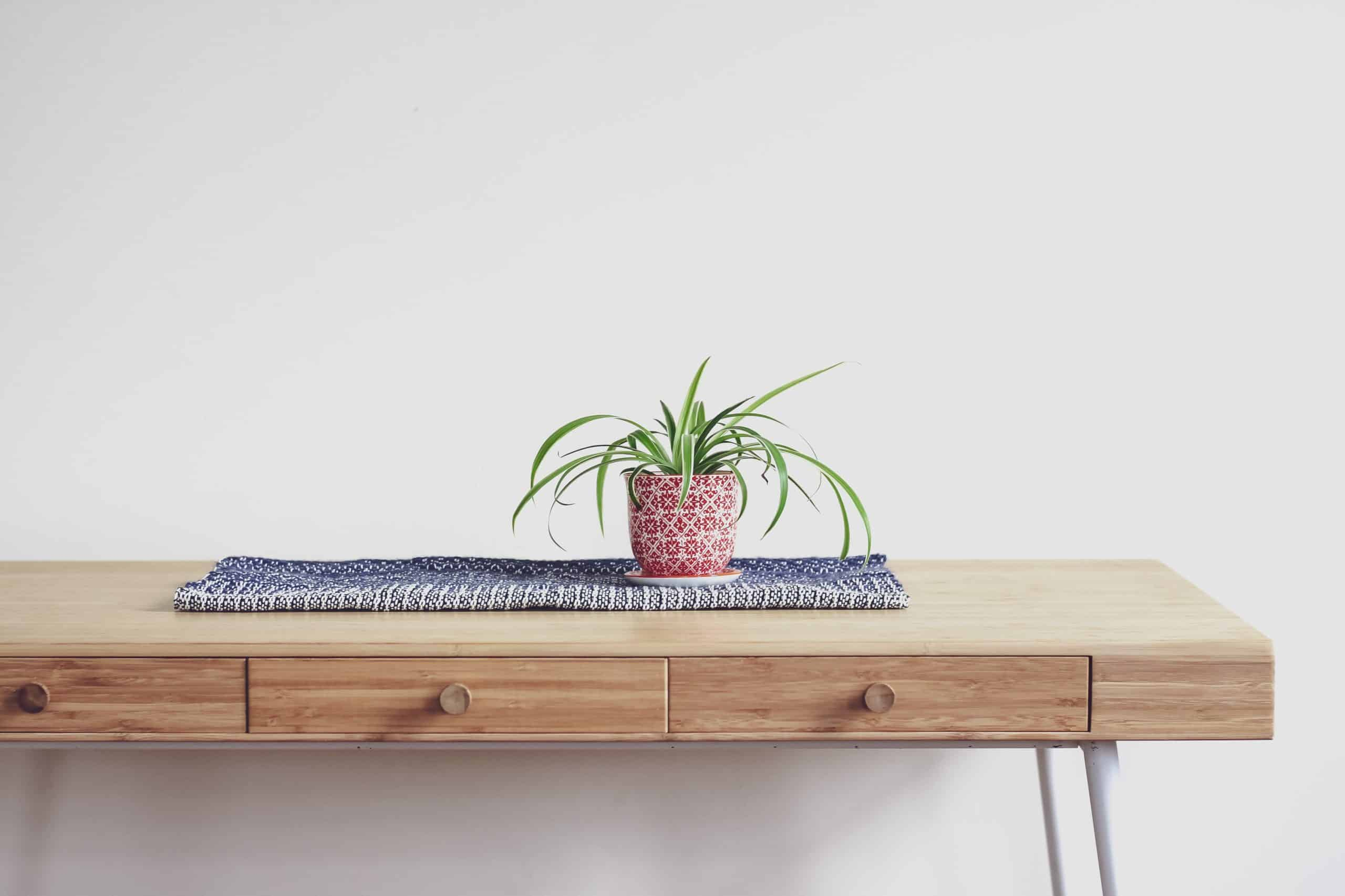 How To Take Care Of Spider Plant: A Guide For Beginners