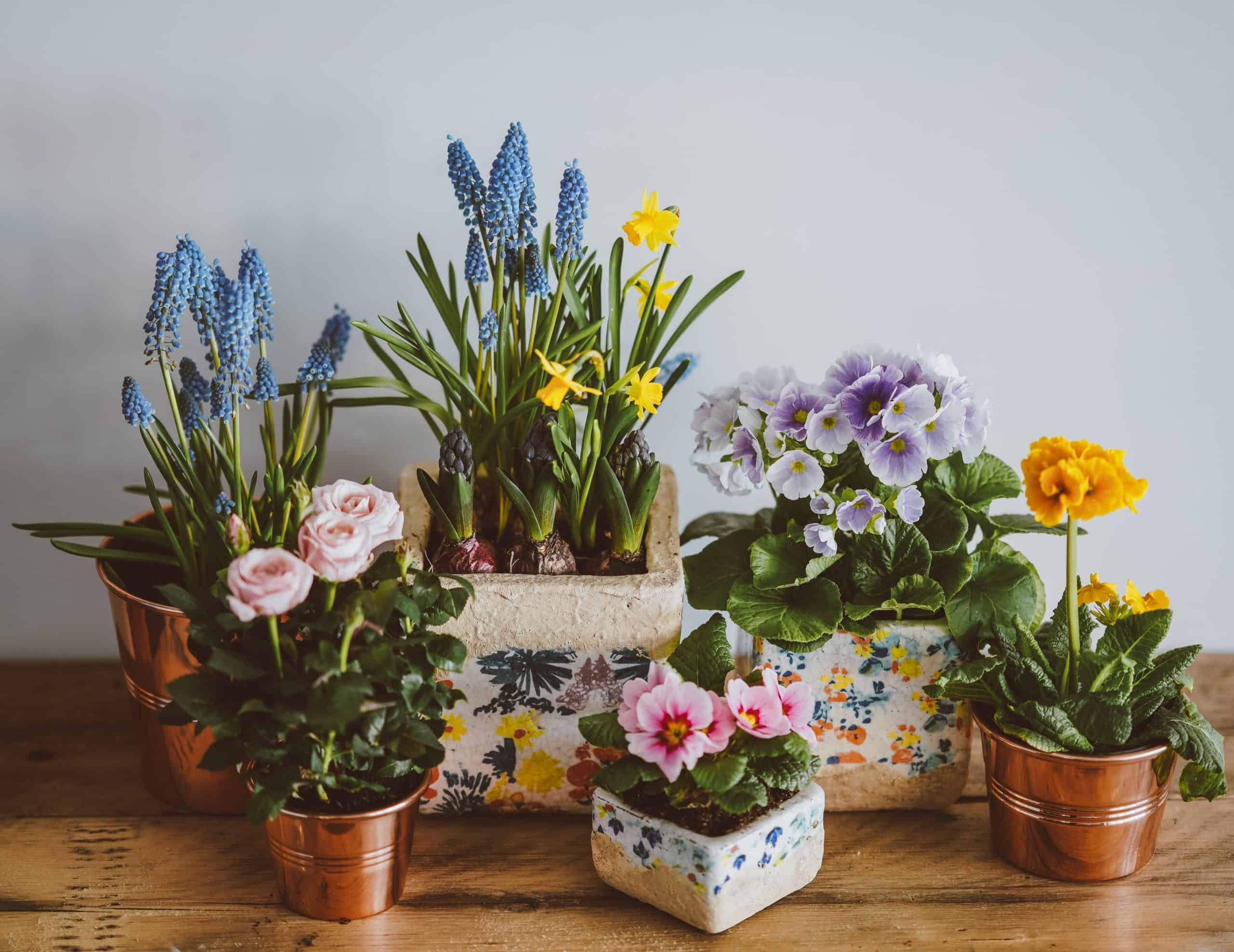 Everything You Need To Know About Plant Pot