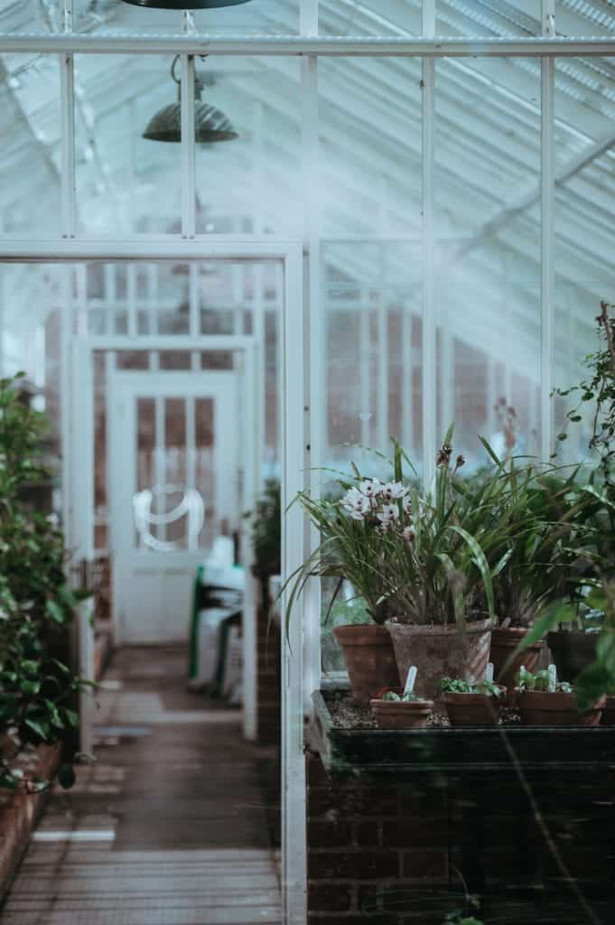 House Plants To Keep The Air Pure In Your House