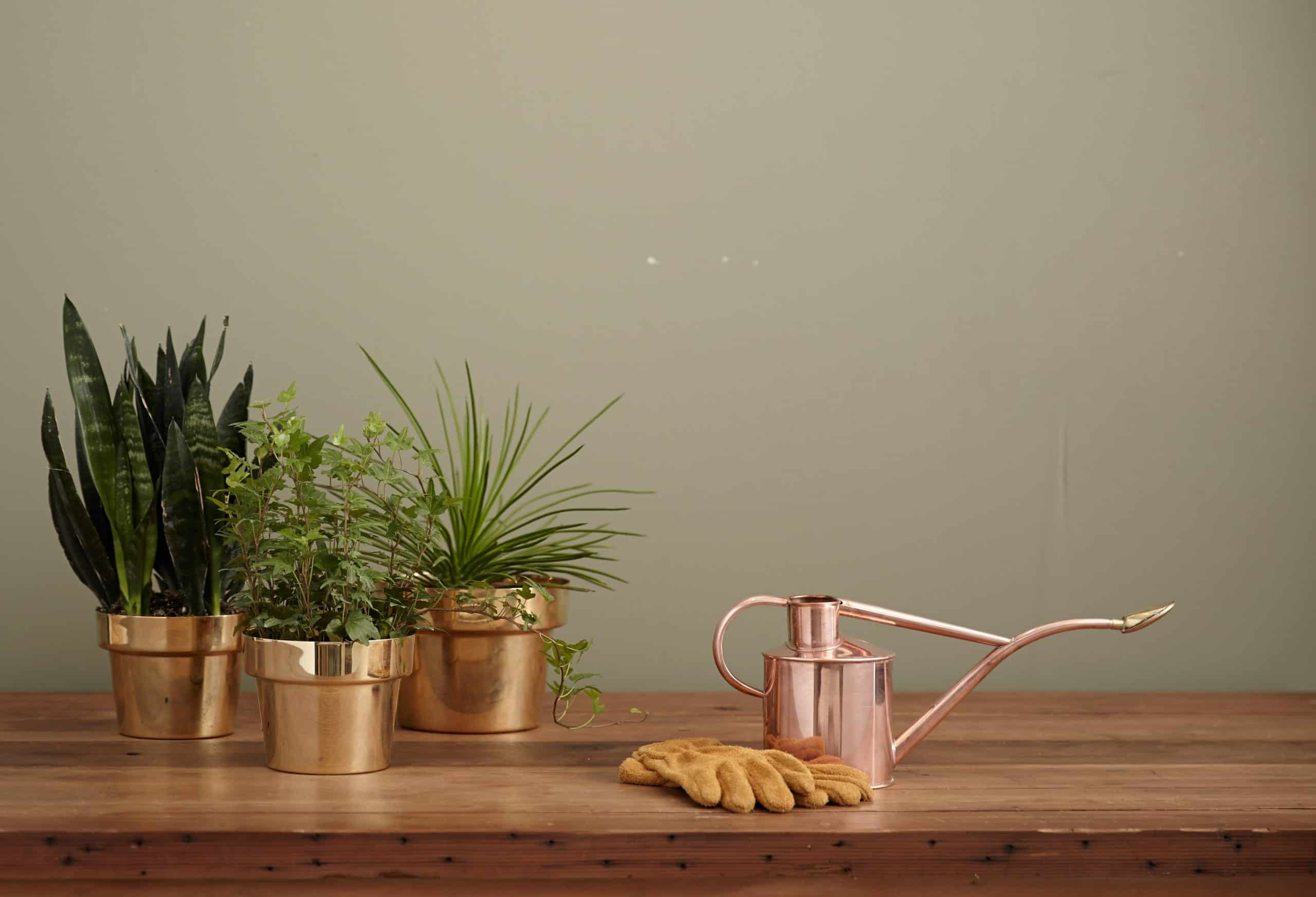 Are Plastic Plant Pots Good For The Health Of Your Indoor Plants