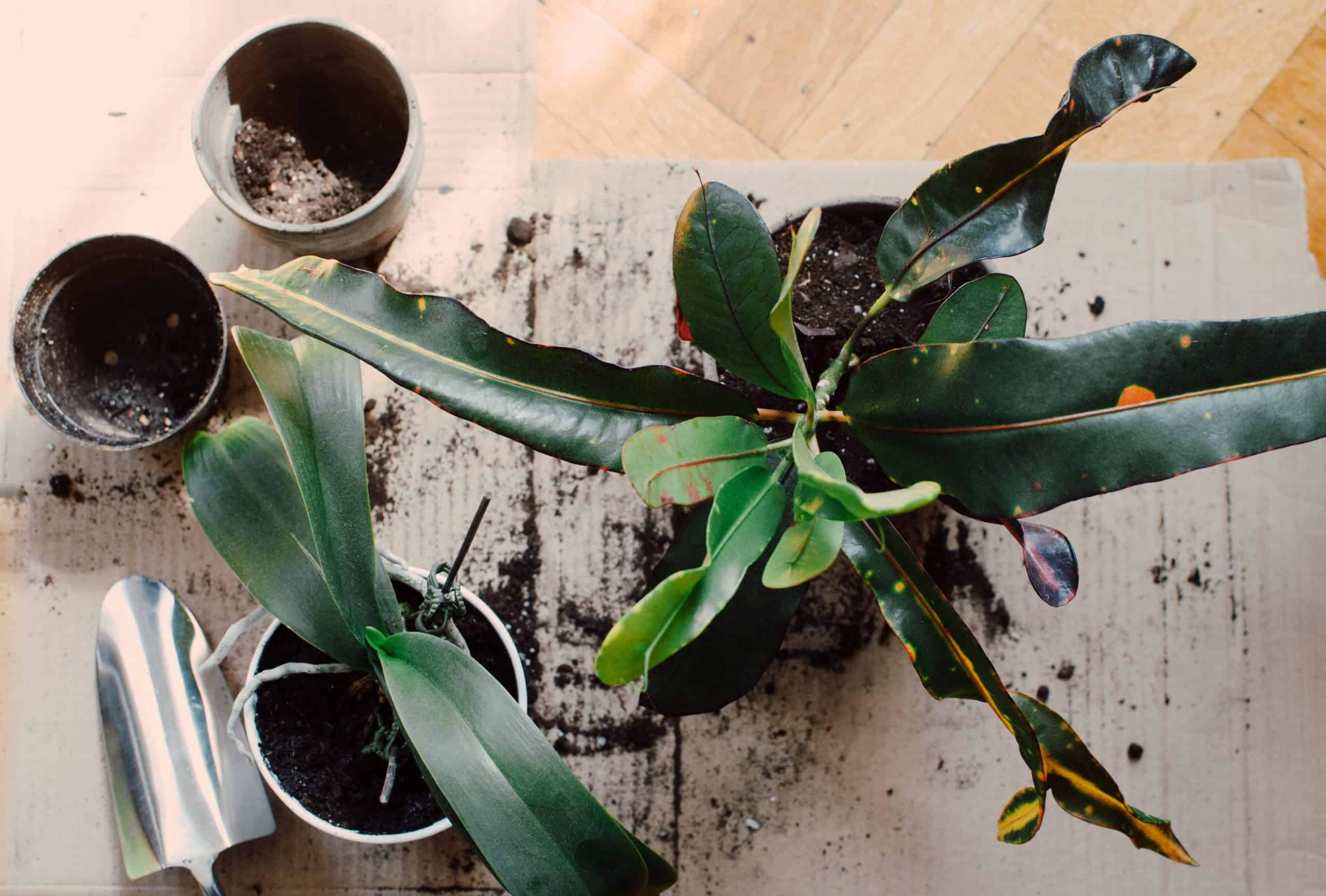 Low Light Indoor Plants That You Can Afford