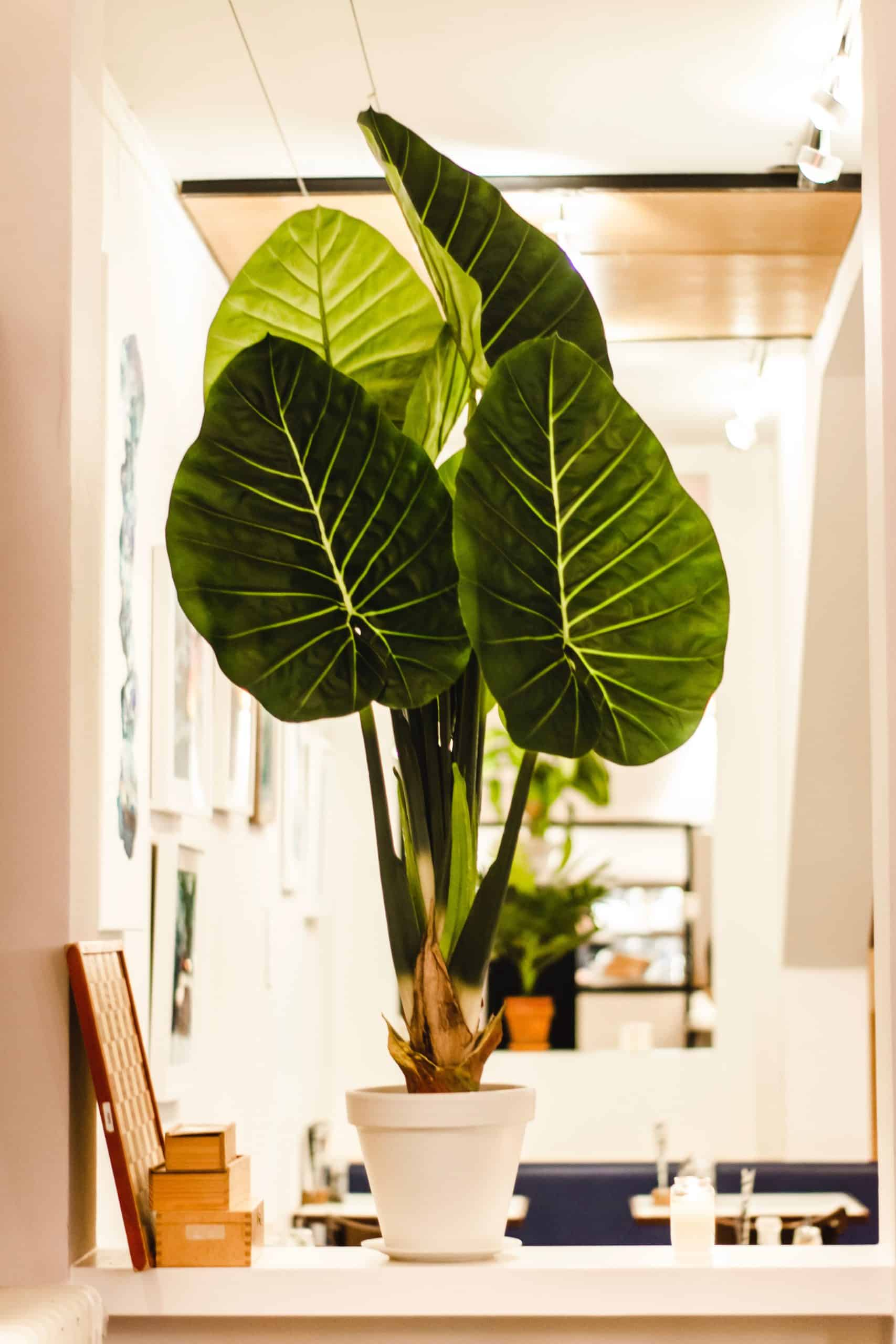 Use Some Indoor Plants To Decorate Your Office