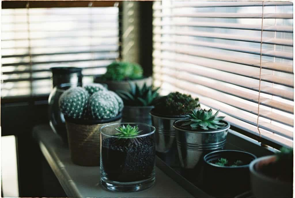Common Watering Mistakes You Do With Succulents