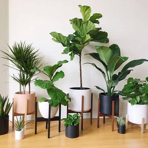 Indoor Plants - Choosing The Best And Tips On How To Have Them