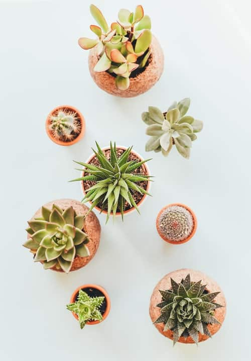 Indoor Plant Care - Good Things to Know