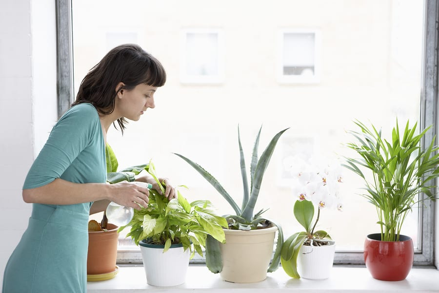 Indoor Plant Care: A Step-By-Step Guide To Take Care Of Your Plants