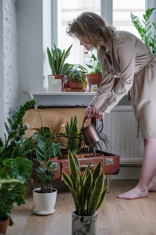 Indoor Plant Care - What Tips Do You Need To Know?
