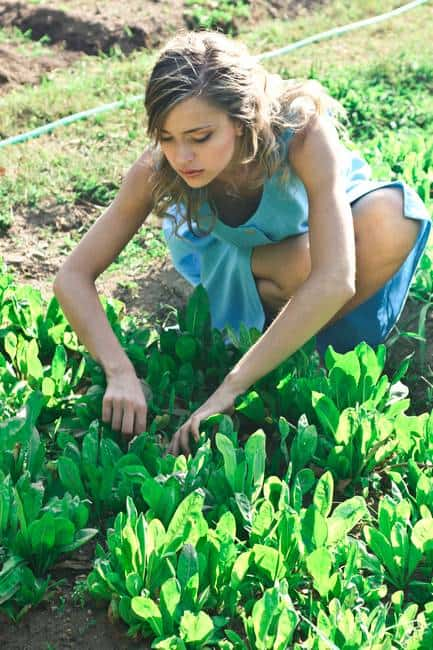 Home Gardening Tips To Grow More & Reduce Waste