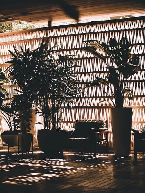 How To Choose Best Indoor Plants For Your Home?