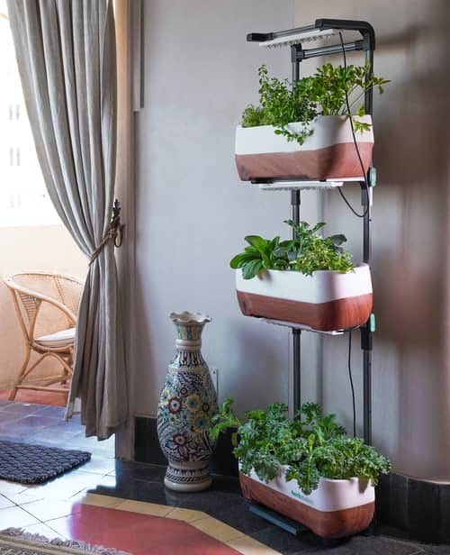 Indoor Herb Garden: Learn Its Good And Bad Effects