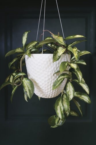 Indoor Plant Hanging Things