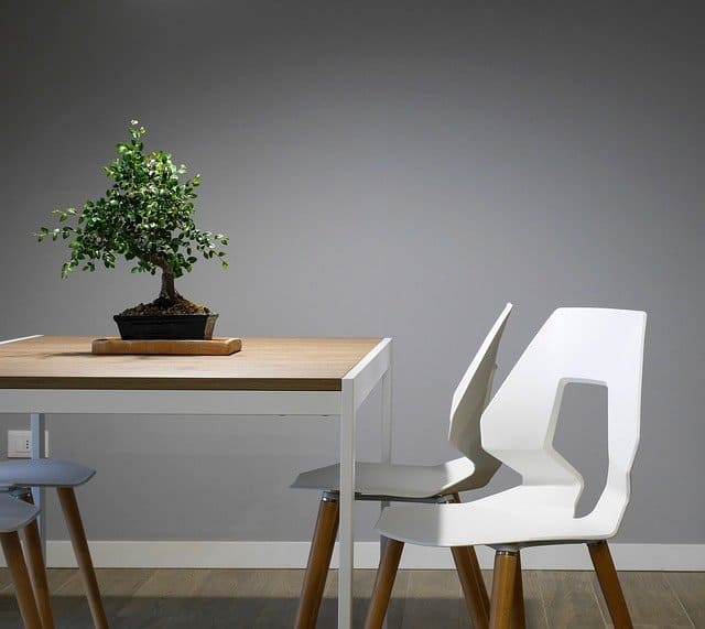 A plant in front of a wooden table